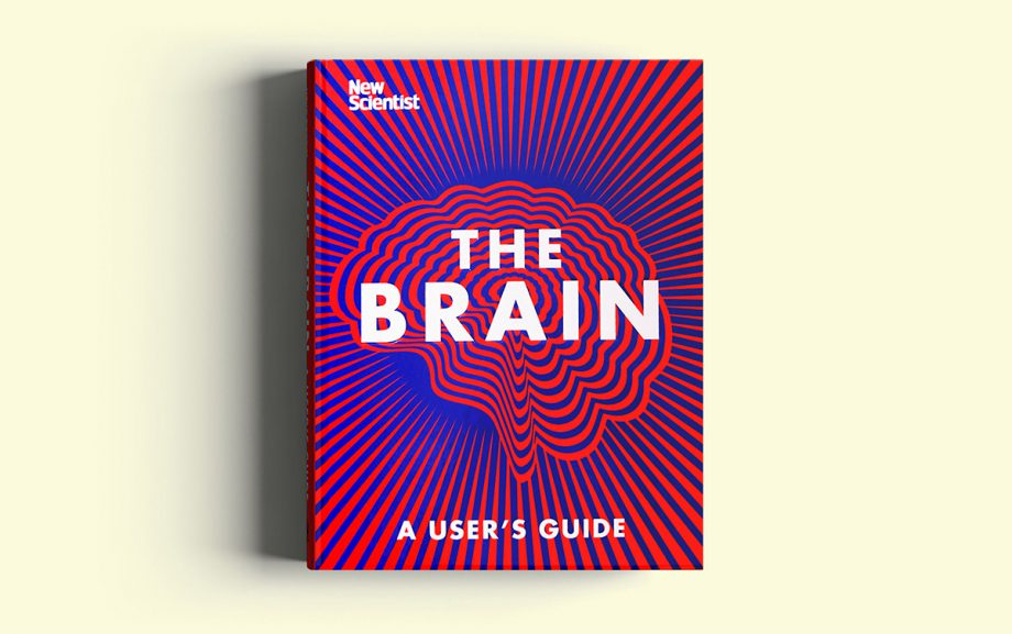 The Brain  by Valentina D'Efilippo