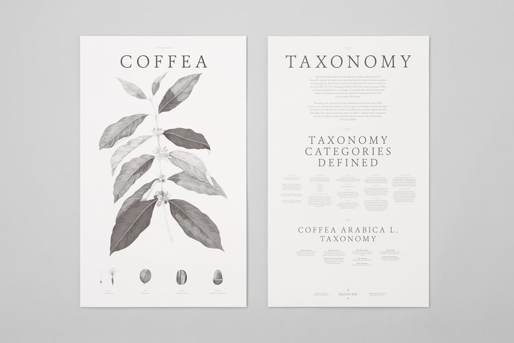 Taxonomy Posters by Pop & Pac Studio